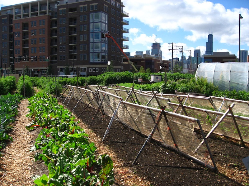 2 Chicago_urban_farm.800
